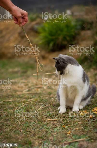 Cat is playing on the garden picture id1176359740?b=1&k=6&m=1176359740&s=612x612&h=sh8kbphhihpozl4gn7ft2dlglhgzdpqmjpgqbwnavnk=