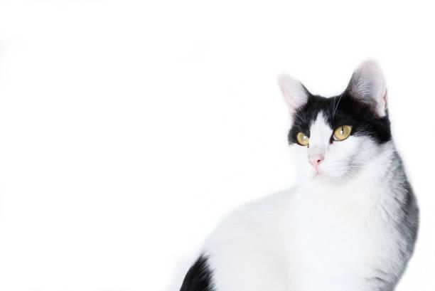 Cat is playing on white background picture id1016439684?b=1&k=6&m=1016439684&s=612x612&w=0&h=1pnwmhj029zvdtmlwqt17uerwu1fgohzcv 3uxbi5he=