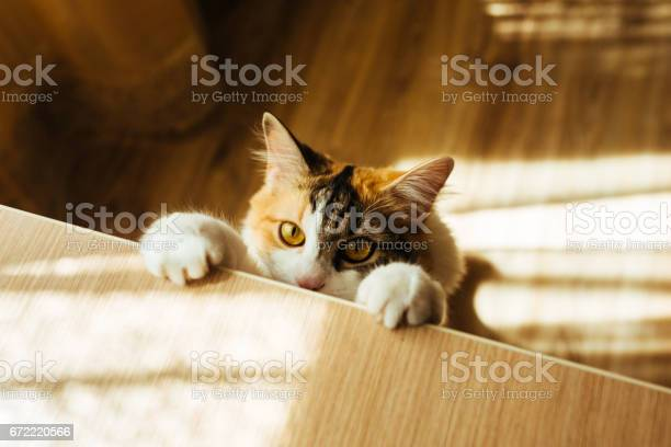Cat is ready for jumping warm toning image lifestyle pet concept picture id672220566?b=1&k=6&m=672220566&s=612x612&h=r2ab95tq5sdehmks6mzsqurubvypozf6 zlmciqqqke=