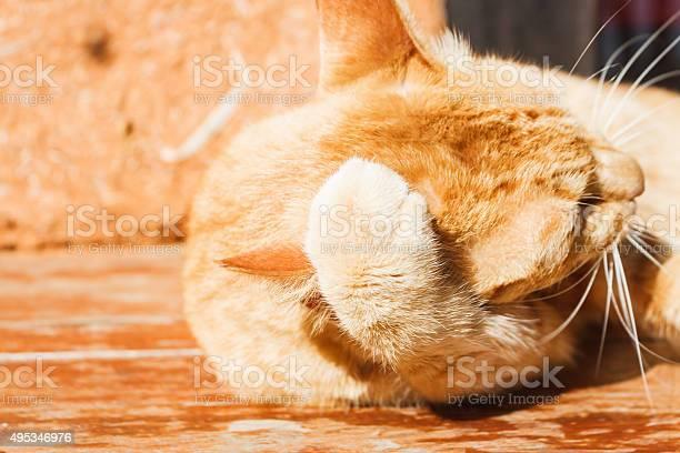 Cat is resting picture id495346976?b=1&k=6&m=495346976&s=612x612&h=ubeicxmczkfzoovenxzpfogwxkp1hoehxr9x nqg9gc=