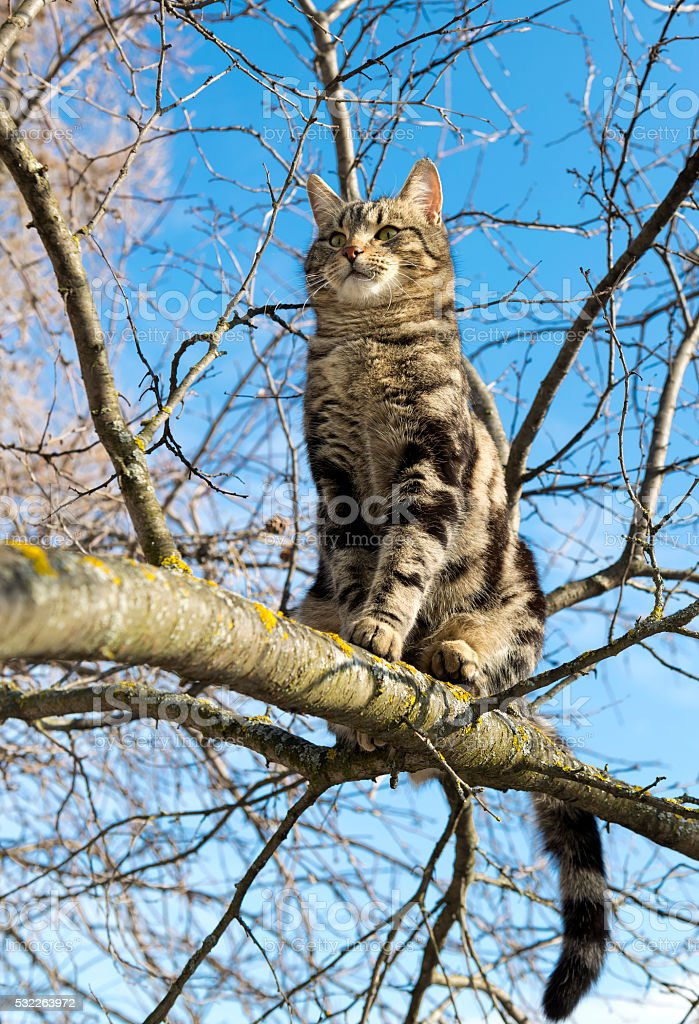 cat is sitting high on the tree stock photo