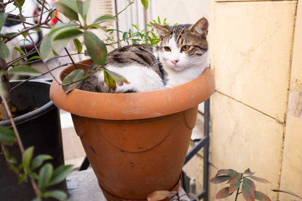 Katze sitzt im Blumentopf – Foto