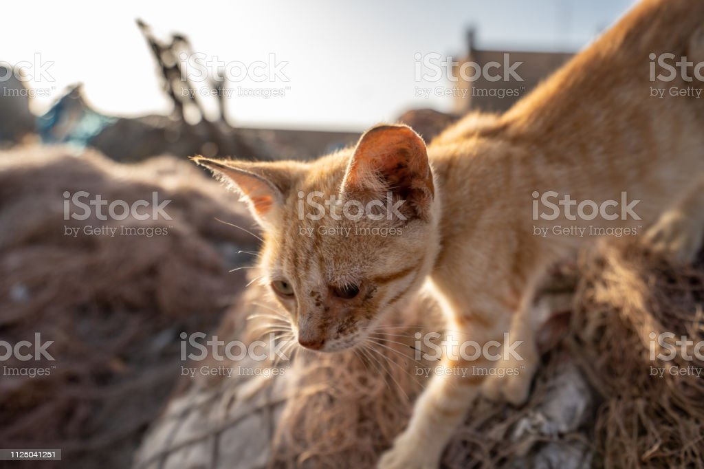 A cat is strolling around in the harbour of Essaouira, Morocco stock photo