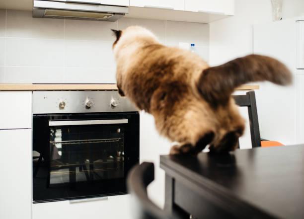 katze in küche aus tabelle zum schalter springen - katzenschrank stock-fotos und bilder