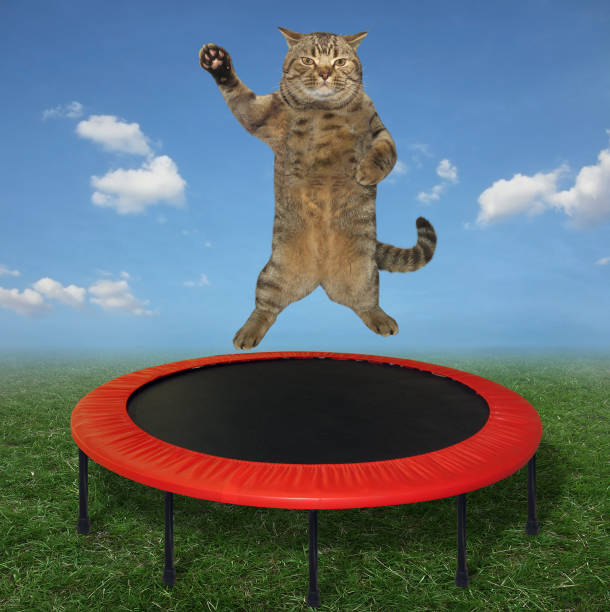 Cat jumping on a trampoline 2 stock photo