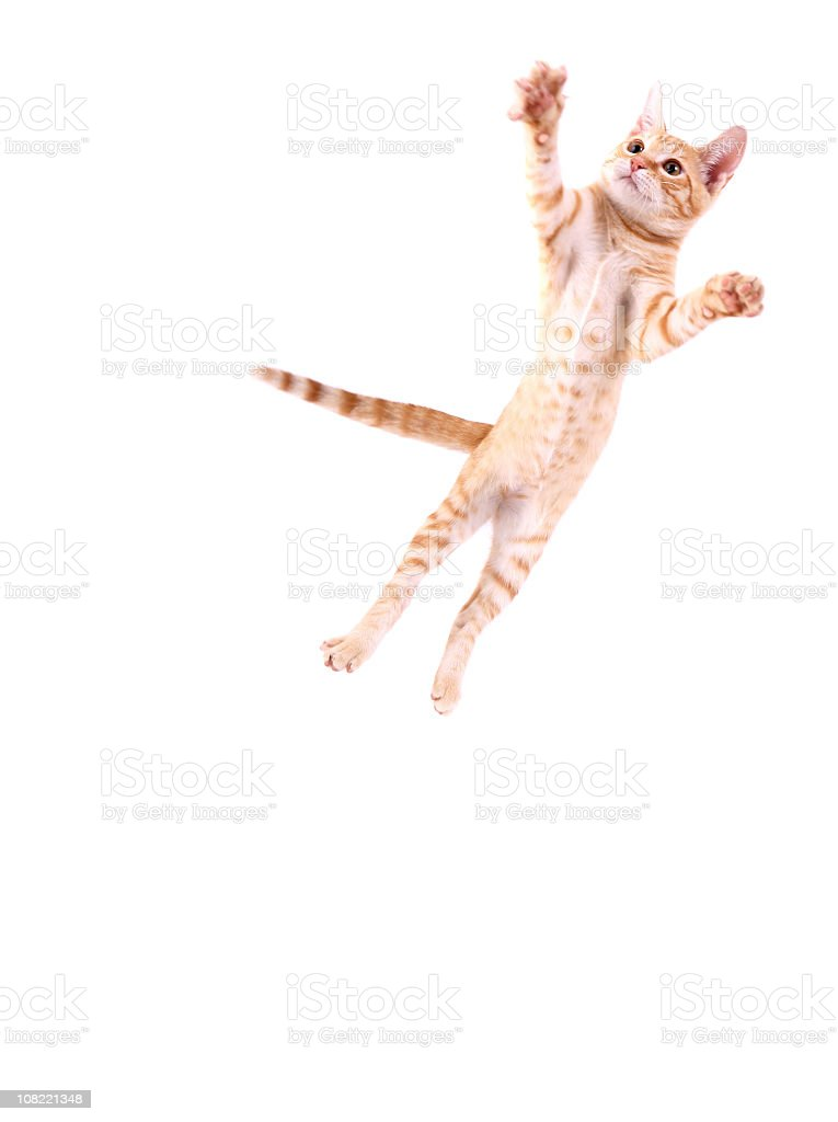Cat Jumping royalty-free stock photo