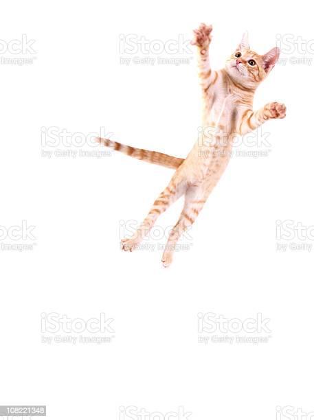 Cat jumping picture id108221348?b=1&k=6&m=108221348&s=612x612&h=uh8motunvgr0bk0z5j0qscnmu6kgupo5owbvzj4qig4=