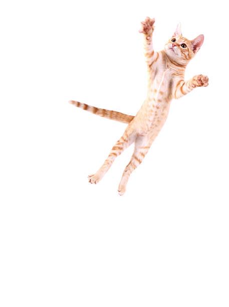 кошка прыжки - котик яркий стоковые фото и изображения