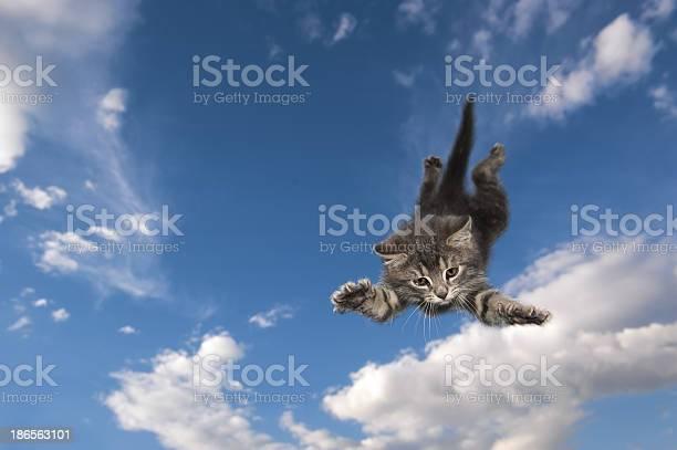 Cat jumps and swims air picture id186563101?b=1&k=6&m=186563101&s=612x612&h=wht hnpxwpk9oz9jcnceqh0kci4teypkx8zygrefrgg=