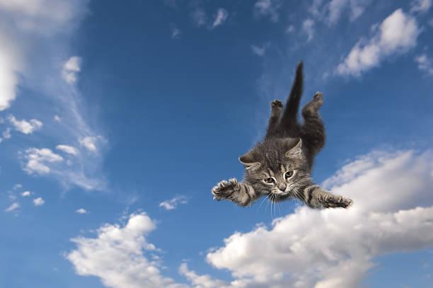 Cat jumps and swims air picture id186563101?b=1&k=6&m=186563101&s=612x612&w=0&h=9l458o7t zwf1gvsqtxznuk7  k52k gz kiwj 4av8=