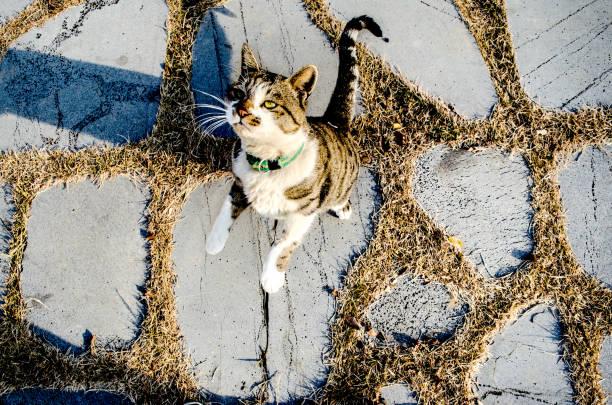 Cat jumps picture id882717838?b=1&k=6&m=882717838&s=612x612&w=0&h=2bufcuu98o 6klao1ufydstsgqs7udqk plma7hxyma=