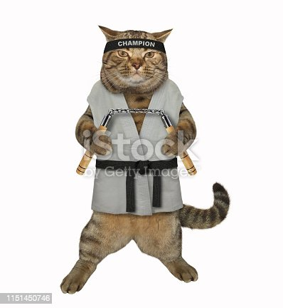 The cat karate fighter in a kimono with a black belt and headband is making exercise with nunchuck. White background. Isolated.