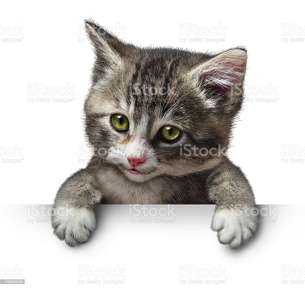 Cat Kitten Blank Sign royalty-free stock photo