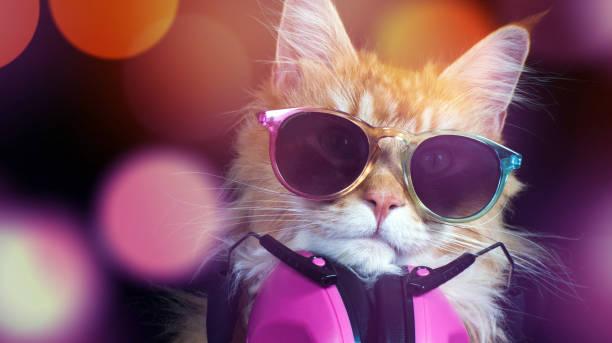 Cat kitten meow animal purr cute feline disco dj picture id1131860061?b=1&k=6&m=1131860061&s=612x612&w=0&h=van2rvdwp 7eoiazqnekiw1g mjqzw0d8pi0jbiitvg=