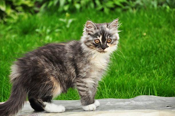 Cat kitten picture id465951649?b=1&k=6&m=465951649&s=612x612&w=0&h=ai rpbxq92arsmyj9btofvn62gut5x 9oayiqku sai=