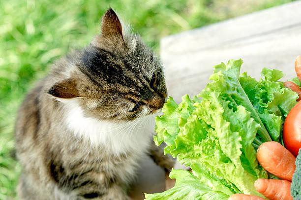 Cat knows what is healthy food picture id497683568?b=1&k=6&m=497683568&s=612x612&w=0&h=qr6thjsab51xkult6y xpryjsi jkzkbgi4qv basjc=