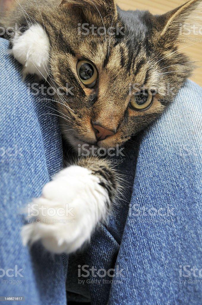 Cat laying inbetween legs stock photo