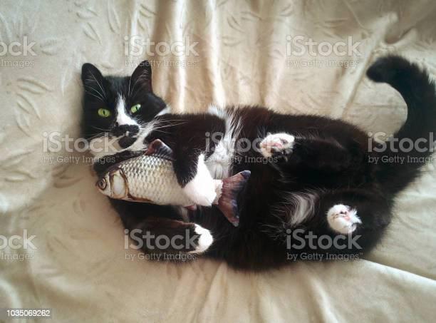 Cat laying on bed picture id1035069262?b=1&k=6&m=1035069262&s=612x612&h=rr6iyvevsh7wcbir95akqiyyxad1m 8uk3on4xaret0=