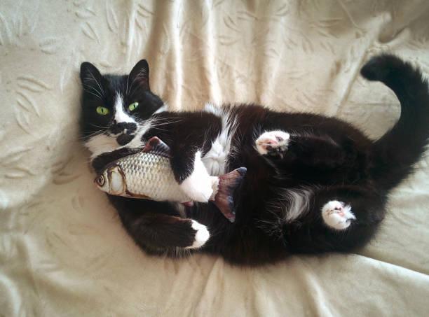 Cat laying on bed picture id1035069262?b=1&k=6&m=1035069262&s=612x612&w=0&h=g696b5ifqfned ykuvy4hhhelzetwnkce9wowgovrxa=