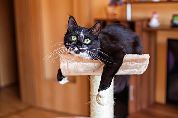 Cat laying on the scratching post picture id467940080?b=1&k=6&m=467940080&s=612x612&w=0&h=glayopqcycizfj2edwogcfdblqths77fwz6z87kipti=