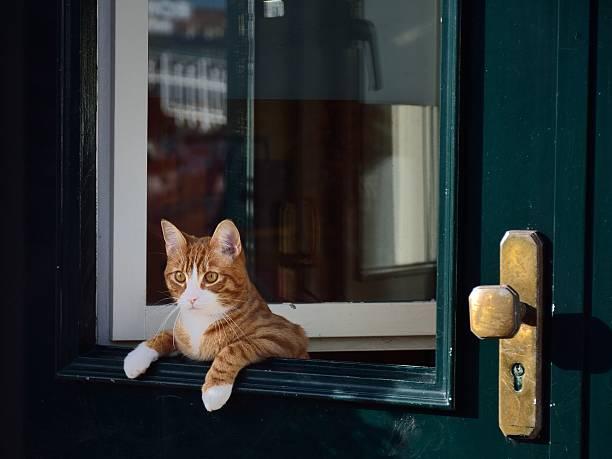 Cat leaning over the green door. stock photo