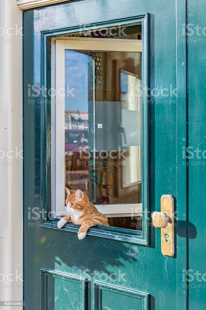 Cat leaning over the green door. stock photo