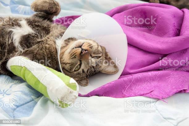Cat leg splint picture id656061580?b=1&k=6&m=656061580&s=612x612&h=p1bkroixag6f2nkvihzix7nfx6torgmqan0yeetcuj8=