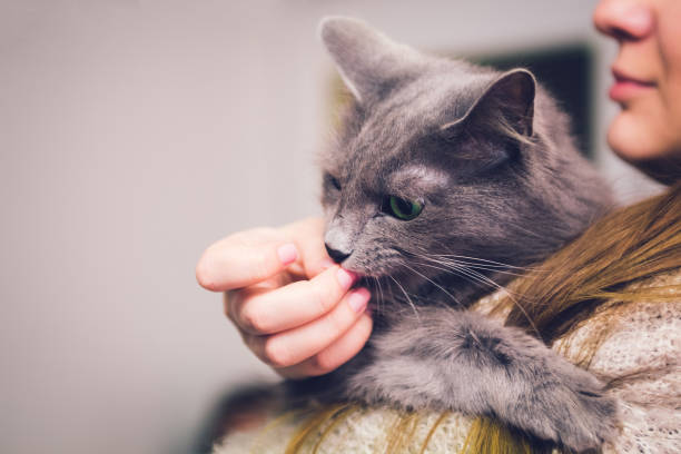 Cat licking human fingers picture id1014103542?b=1&k=6&m=1014103542&s=612x612&w=0&h=xs98pkfetba9zbzix0xdf5ej87sfqy6irflxglsykic=