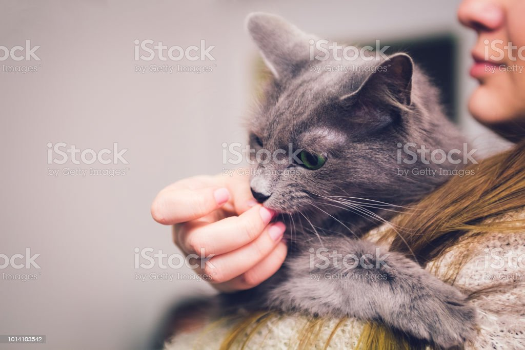 Cat Licking Human Fingers stock photo