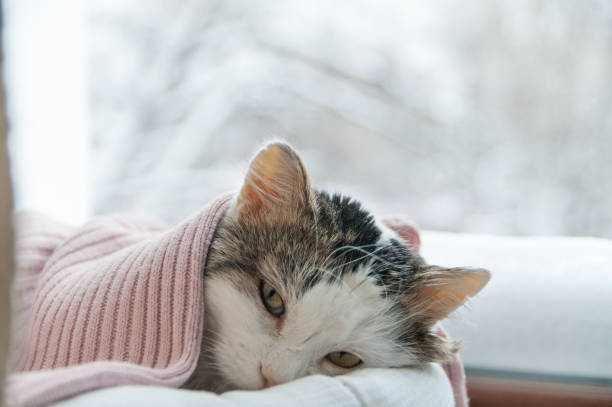 cat lies on the window in winter stock photo