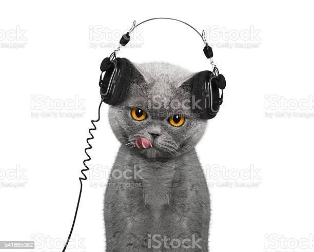 Cat listening to music and enjoy it picture id541865062?b=1&k=6&m=541865062&s=612x612&h= hfpifjsxlhhwxrwslslz riigw8pugws8qfo9rjp84=