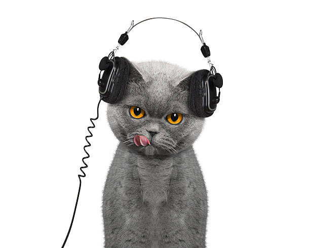 Cat listening to music and enjoy it stock photo