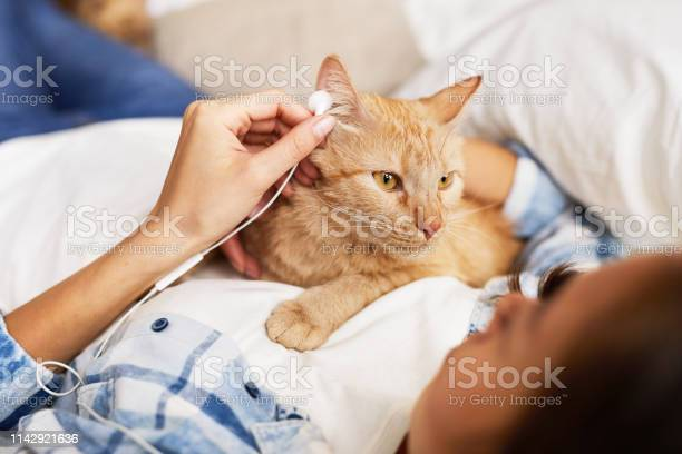 Cat listening to music picture id1142921636?b=1&k=6&m=1142921636&s=612x612&h=ul7welkn6snuveid3ne4chm ffk6u88ascifxrgvl3i=