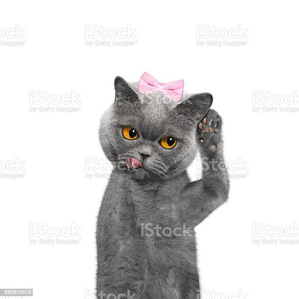 Cat listens attentively to somebody picture id530829576?b=1&k=6&m=530829576&s=612x612&h=hjeorz7ure4ckcebhkjffmn3jbfgi1ri nlwyk3 w 0=
