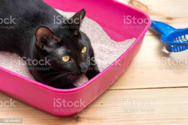 Cat litter box picture id1061894902?b=1&k=6&m=1061894902&s=612x612&h=c7ewpmntu pqedg50lsq l0xz3td0duh  kwpgfgtpu=