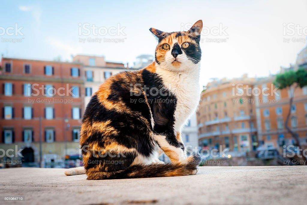 Cat lives near Largo di Torre Argentina, Rome, Italy stock photo