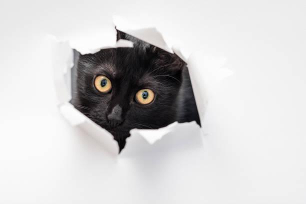 Cat look ripped hole white paper peekaboo naughty picture id1045529590?b=1&k=6&m=1045529590&s=612x612&w=0&h= rnrflopsq5szo2pl0gopike18xxxc7osqlir juioq=