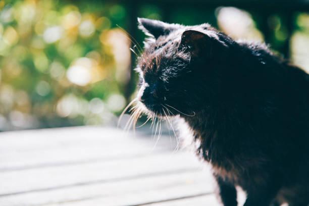 ポイントを見て猫 - j_nice ストックフォトと画像