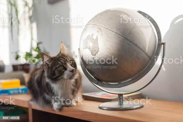 Cat looking at an earth globe picture id898146508?b=1&k=6&m=898146508&s=612x612&h=lpxwlk4qb2 fikipjdmmtemhmjkoy548l7n0r0zylvy=
