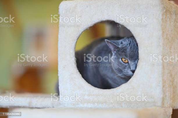 Cat looking at camera in cat toy house picture id1155430360?b=1&k=6&m=1155430360&s=612x612&h=k7ngdxn6owkvxqqnsmixh13usirexvl93gos4wijbga=