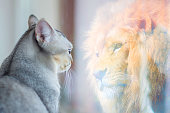istock Cat looking at mirror and sees itself as a lion. Self esteem or desire concept. 1185190676
