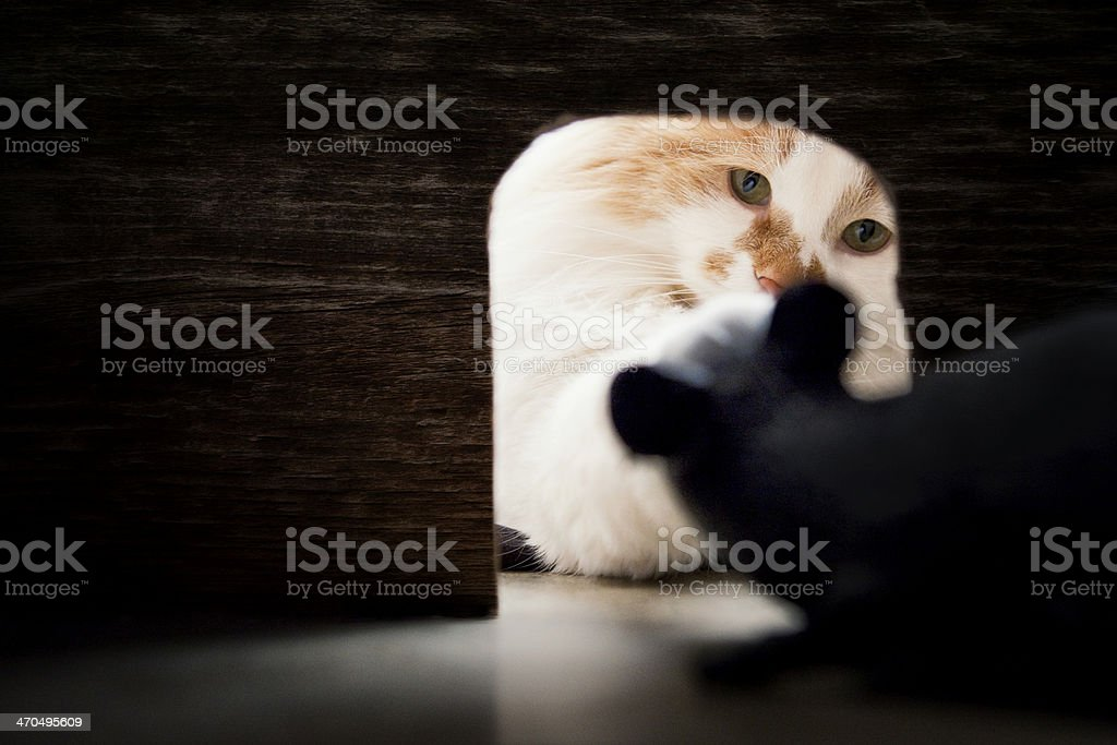 Cat Looking at Mouse in Hole stock photo