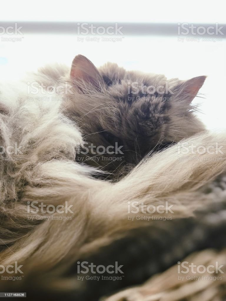 Cat looking at the camera stock photo