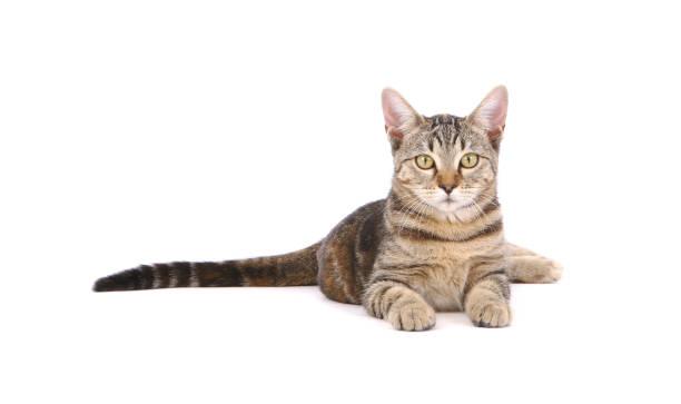 Katze mit Blick auf die Kamera – Foto