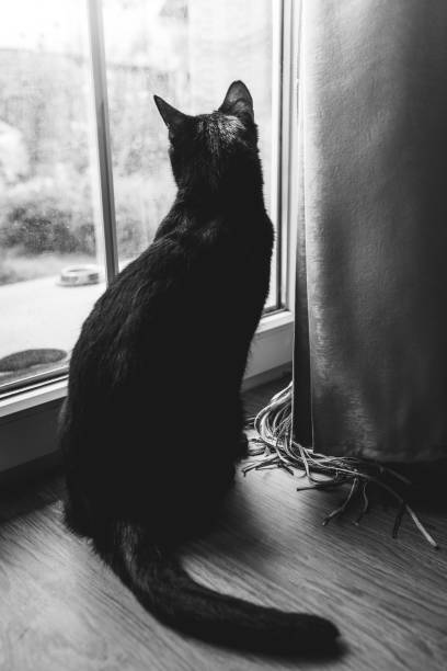 Cat looking at the window picture id1028309522?b=1&k=6&m=1028309522&s=612x612&w=0&h=1zahc3k5ijqzvxenf3izawppxm4v hmvs6vp1knflei=