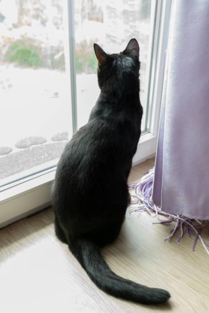 Cat looking at the window picture id1029240118?b=1&k=6&m=1029240118&s=612x612&w=0&h=lpdwl0qibiiogkptsa5zbz 7 pkpeux6cshdeu1m4eq=