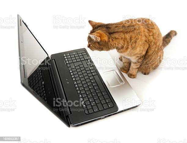 Cat looking in a laptop screen browsing the internet picture id165653351?b=1&k=6&m=165653351&s=612x612&h=gye9e96i3lk1dcraes6 jjwgli6koryvkbrppm81wqo=