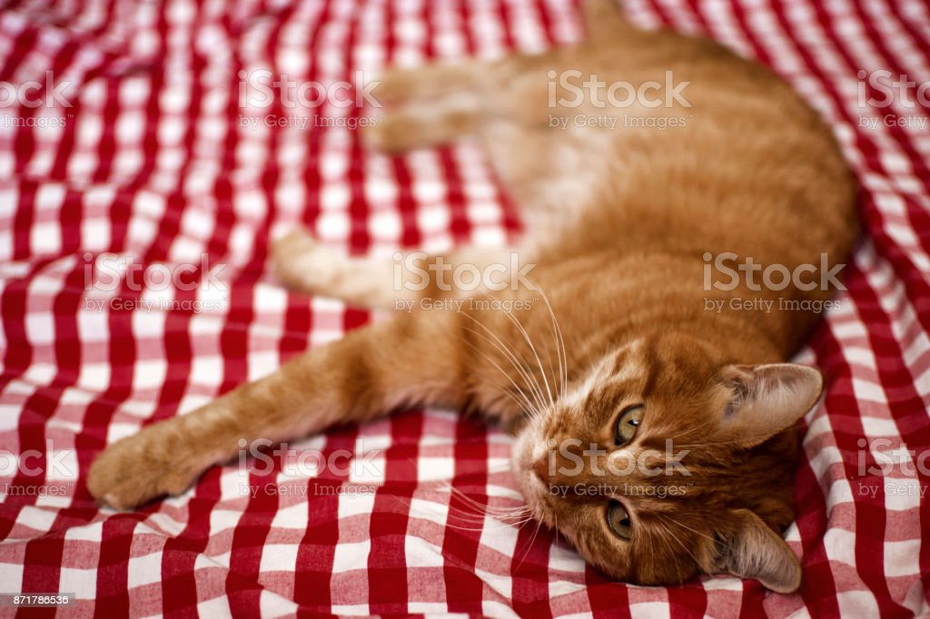 Cat looking in camera stock photo