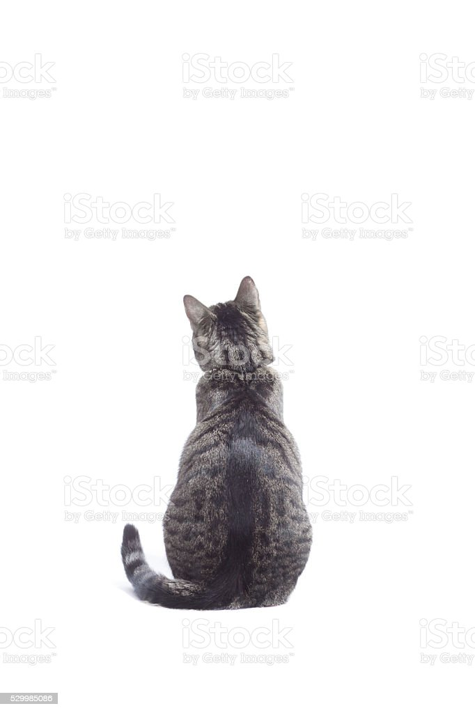 Cat looking in front, shot from behind. stock photo