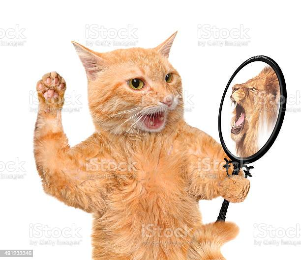 Cat looking into the mirror picture id491233346?b=1&k=6&m=491233346&s=612x612&h=nmuba0ro42v5ebs eaubehsywdhbkbzdgafq2 0hv5w=